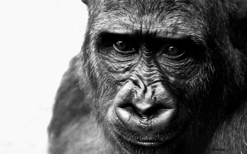 Si se že kdaj pri prodaji počutila kot opica?